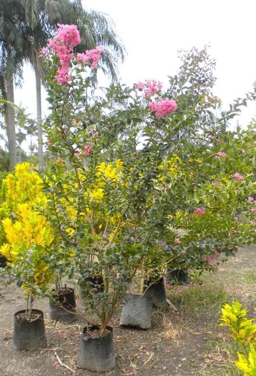 Plantas de exterior y sol - Plantas exterior mucho sol ...