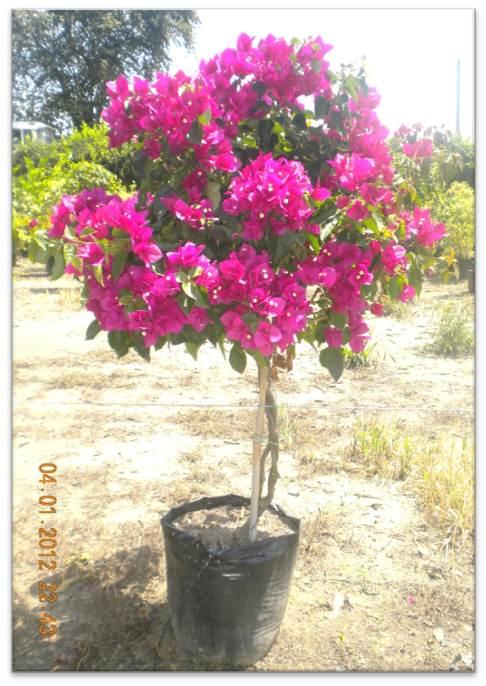 Nuestra empresa vivero marinela for 20 plantas ornamentales