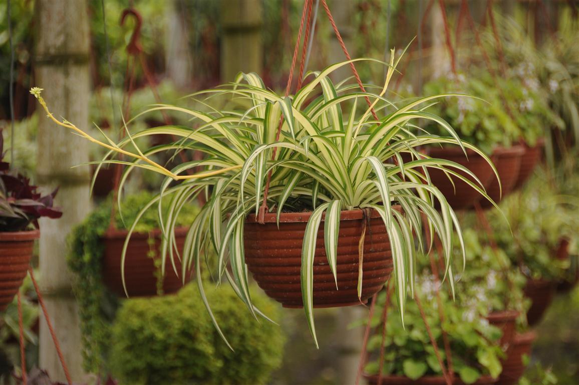 Plantas de exterior y sol - Plantas de exterior resistentes ...